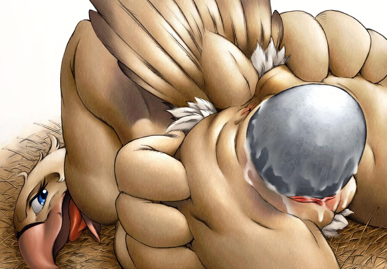 Adult falcon eggs