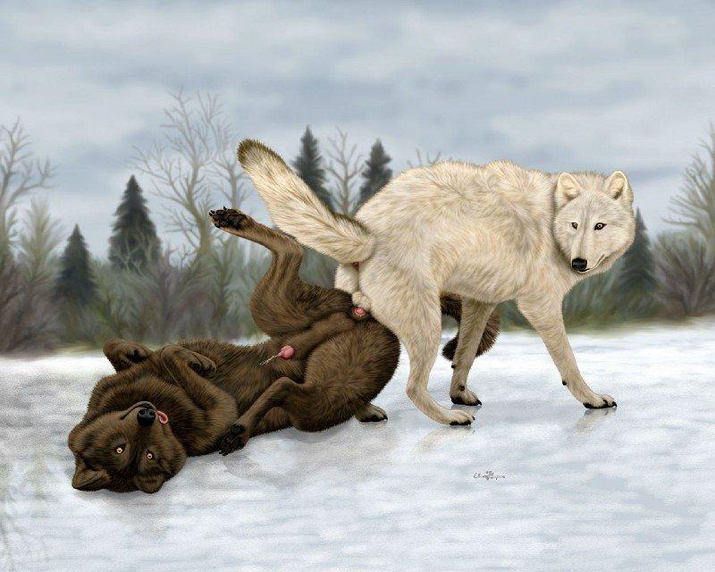 Волк и секс