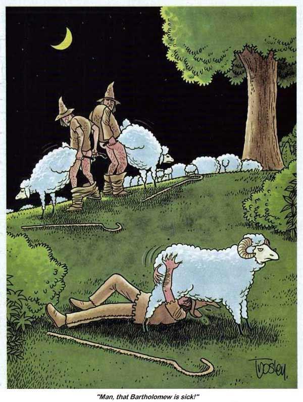 С овцами сношения