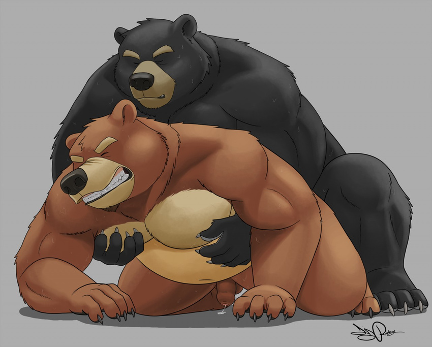 Медведи гей фото порно