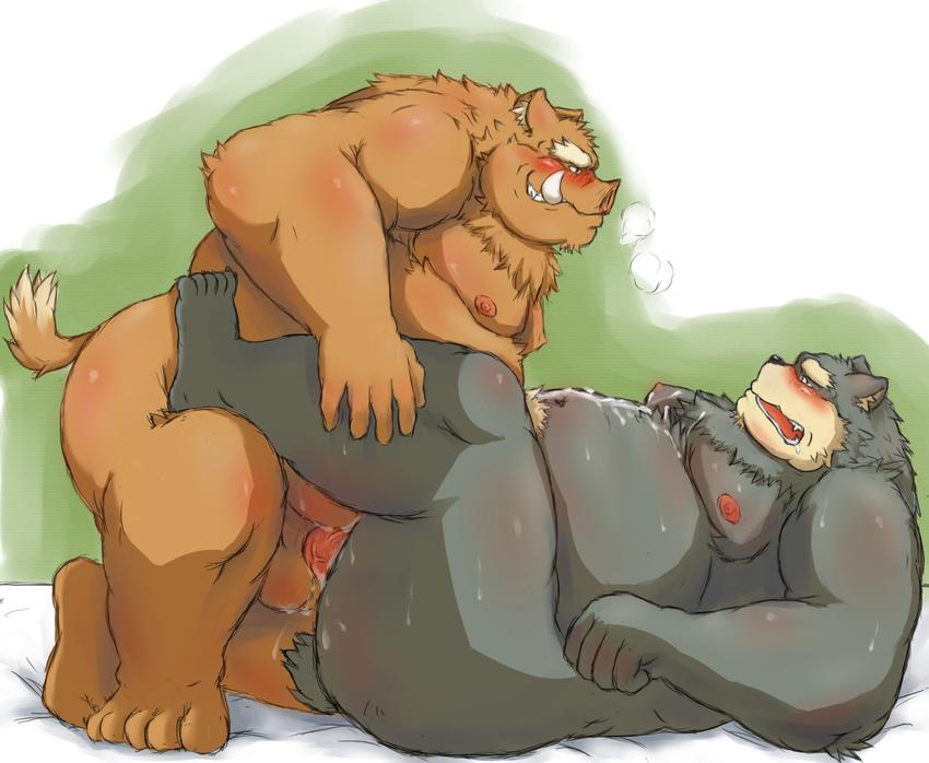 Смотреть порно видео медведи геи порно