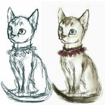 acci cat collar colored cub digital_drawing_(artwork) digital_media_(artwork) fae fan_character feline female feral fur mammal model_sheet shhhitme simple_background sitting sketch white_background young