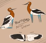 2015 ambiguous_gender american_avocet avian avocet beak bird black_beak black_eyes black_feathers black_wings blue_skin brown_background brown_feathers character_name close-up colored_sketch dot_eyes english_text eye_markings facial_markings feathered_wings feathers featureless_feet feral folded_wings gryphon kestrels long_beak long_neck markings model_sheet multicolored_feathers multiple_poses pointybird pose quadruped shorebird side_view simple_background sitting solo species_name spread_wings standing tail_feathers text two_tone_wings white_feathers white_markings white_tail white_wings wings
