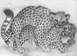 2015 all_fours animal_genitalia anthro anthro_on_feral bestiality bite cheetah cum feline feline_penis feral from_behind interspecies male male/male mammal nude penis sex sketch spera