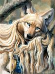 anthro black_nose blonde_hair blue_eyes canine coyote detailed_background female fur hair hibbary looking_at_viewer mammal smile solo tan_fur