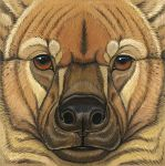 2010 ambiguous_form ambiguous_gender black_nose brown_eyes brown_fur brown_spots eye_markings facial_markings front_view fur giant_short-faced_hyena gouache_(artwork) headshot_portrait hyena icon looking_at_viewer mammal markings multicolored_fur photorealism portrait signature snout solo spots spotted_fur synnabar tan_fur tan_markings traditional_media_(artwork) two_tone_fur whiskers