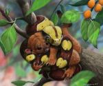 2015 4_toes absurd_res black_scales boa_constrictor branch brown_eyes brown_nose brown_scales claws coiling cub cuddling cute depth_of_field detailed detailed_fur detailed_scales digital_media_(artwork) digital_painting_(artwork) duo eyes_closed feral food friends fruit fur hi_res in_tree kinkajou leaf long_tail looking_at_another mammal mixed_media multicolored_scales nature on_branch orange_fur orange_tail predator/prey procyonid psithyrus quadruped reptile scales scalie serpentine signature silver_peanut_butter_fruit smile snake snout toe_claws toes traditional_media_(artwork) tree whiskers white_claws yellow_scales young
