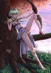 1girl adsouto arrow artist_name autumn_leaves barefoot_sandals belt blush bow breasts center_opening day dress elf frills goblin_slayer! green_eyes green_hair high_elf_archer_(goblin_slayer!) highres holding holding_weapon licking licking_weapon long_hair looking_at_viewer pelvic_curtain platform_footwear pointy_ears short_hair_with_long_locks sitting small_breasts solo tree weapon white_dress